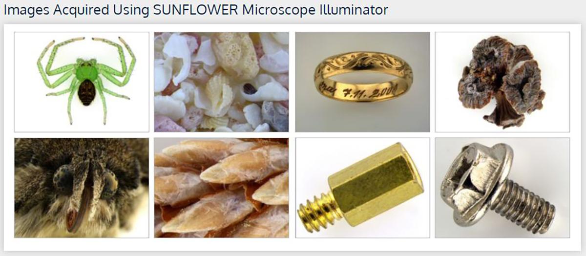Sunflower Examples