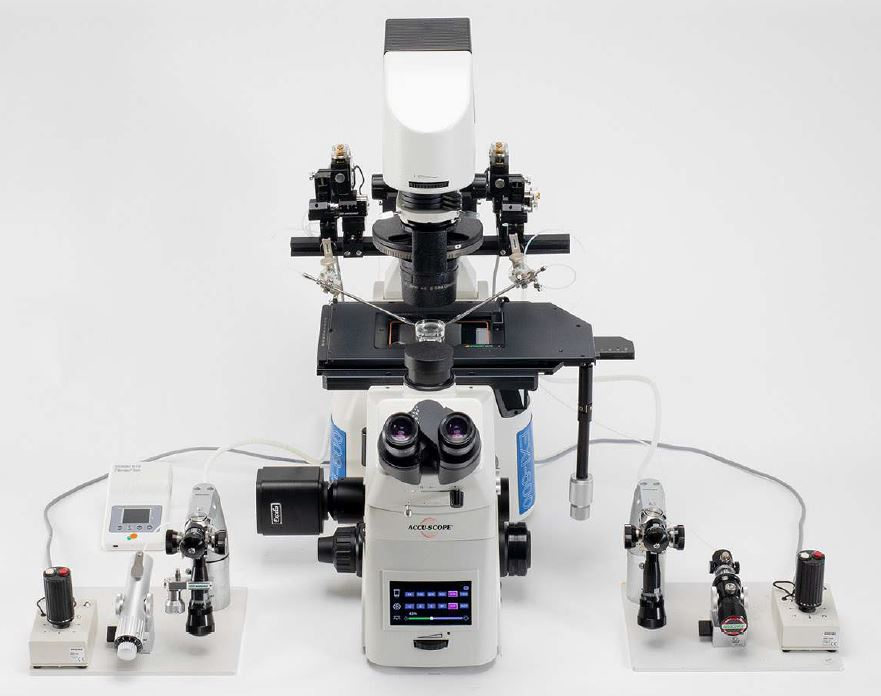 ACCU-SCOPE exi-600-microinjection